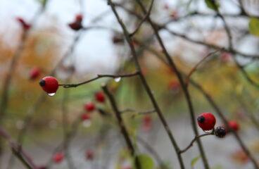Podzimní aktivity Okrašlovacího spolku Vochov